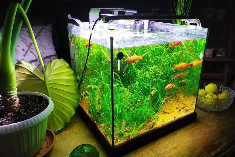 В одном из наших аквариумов больше 10средних меченосцев имальков, ноперенаселение неощущается, потомучто рыбы мирные, одного вида, а еще в аквариуме много растений имощная фильтрация