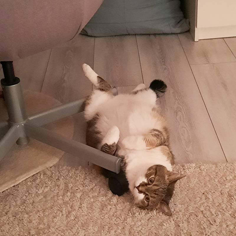 Наша кошка