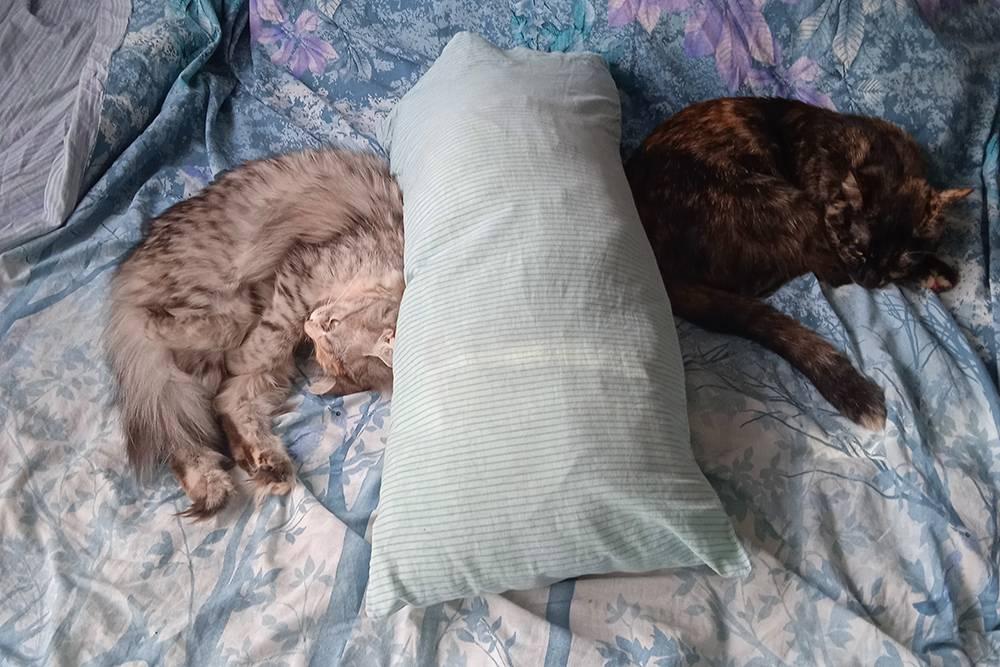 Кошки лежат рядом со мной