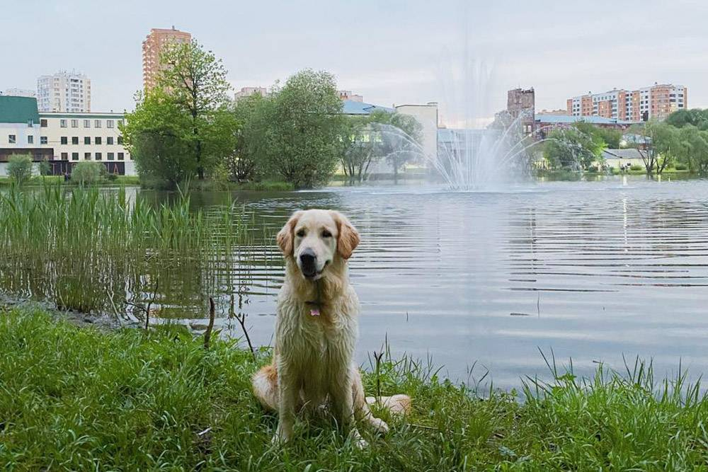 Прогулялись к пруду