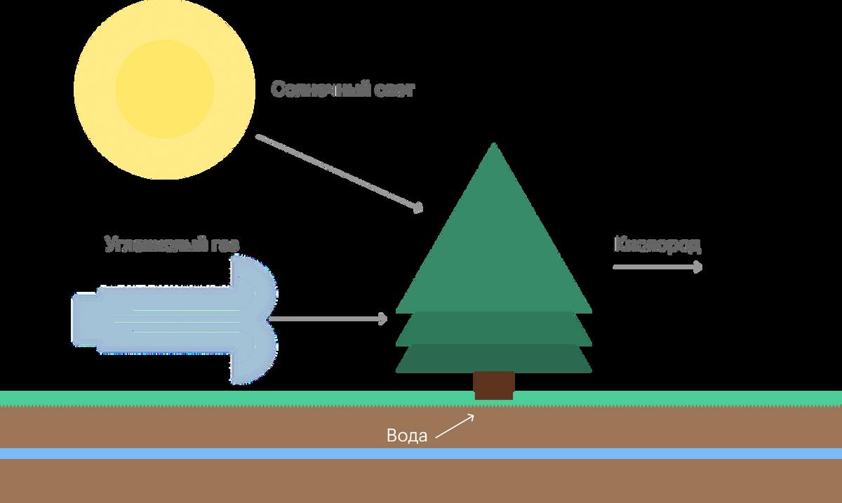 Растения создают сахара из углекислого газа и воды, а от лишнего кислорода избавляются, выбрасывая его в атмосферу. Источник: UCL
