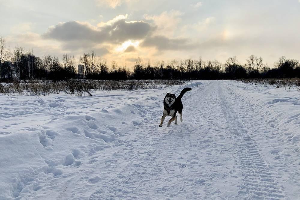 В прошлом дневнике найти собаку было довольно сложно, год спустя должно стать полегче:)