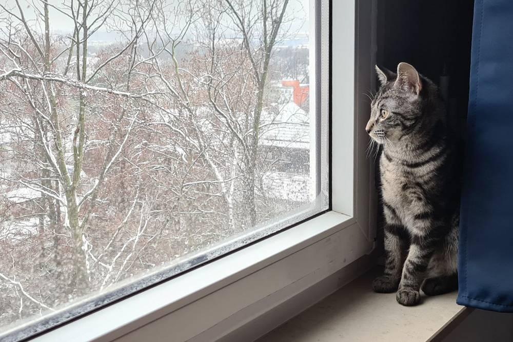 Кот второй раз в жизни видит снег