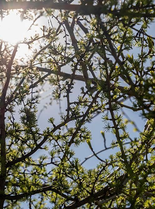 На севере весной все очень быстро зеленеет