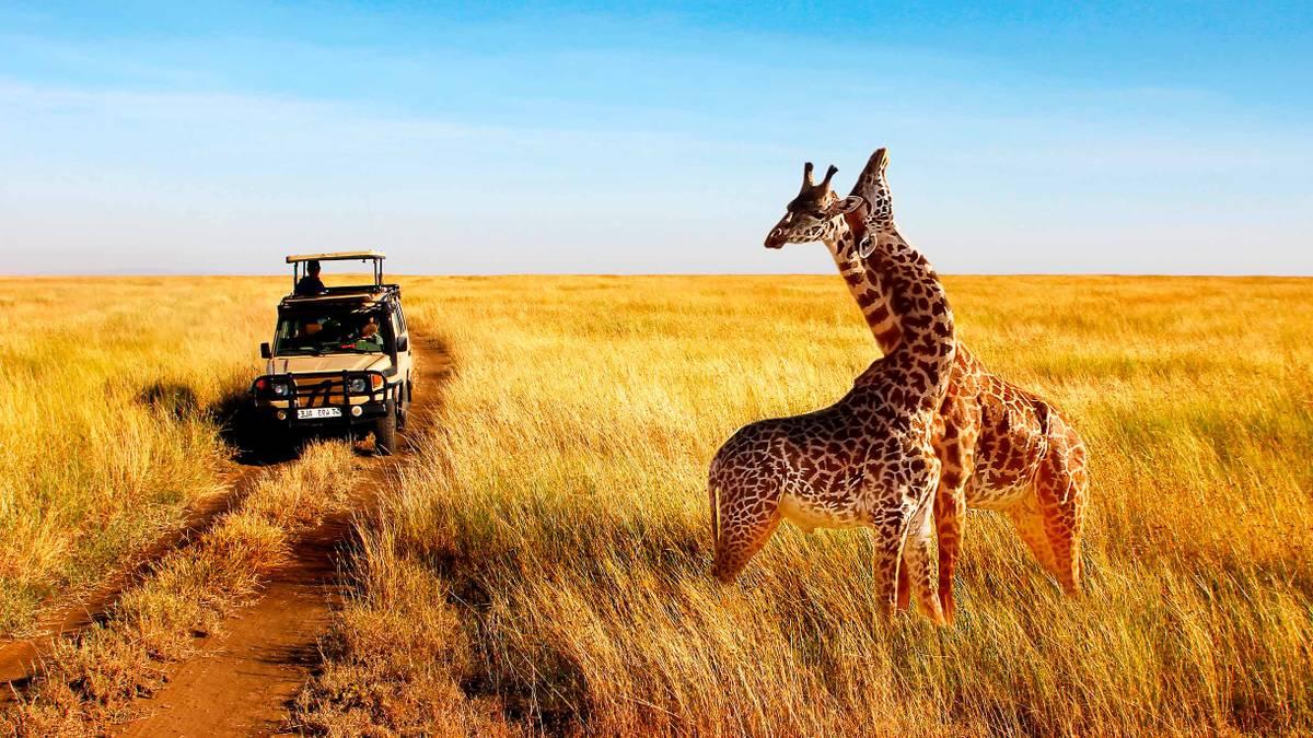 Сколько стоит сафари в Кении
