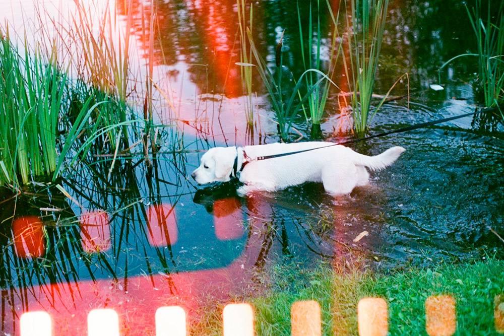 В мае 2020 года Марго впервые увидела пруд
