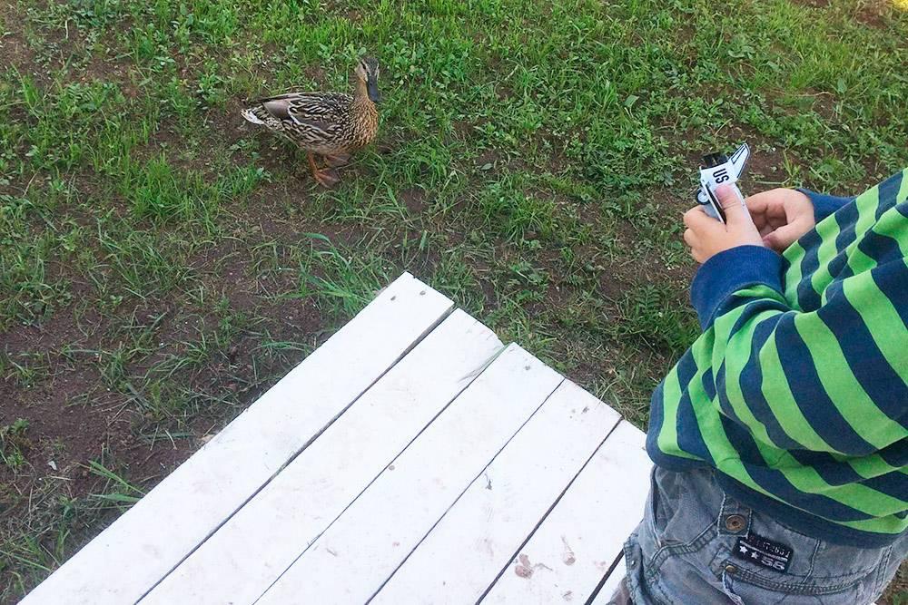 Белки, зайцы, ежи и, конечноже, утки сами посебе бродят поучастку: природы унас хватает