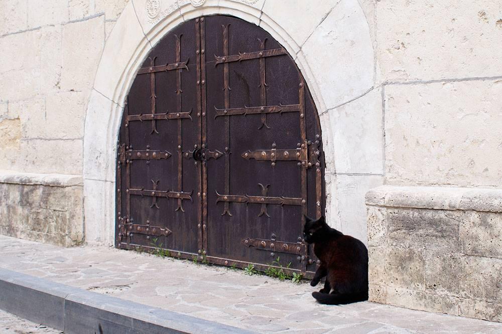 Котики — часть евпаторийского шарма. В Старом городе есть кафе «Йоськин кот» с «придворными» кошками
