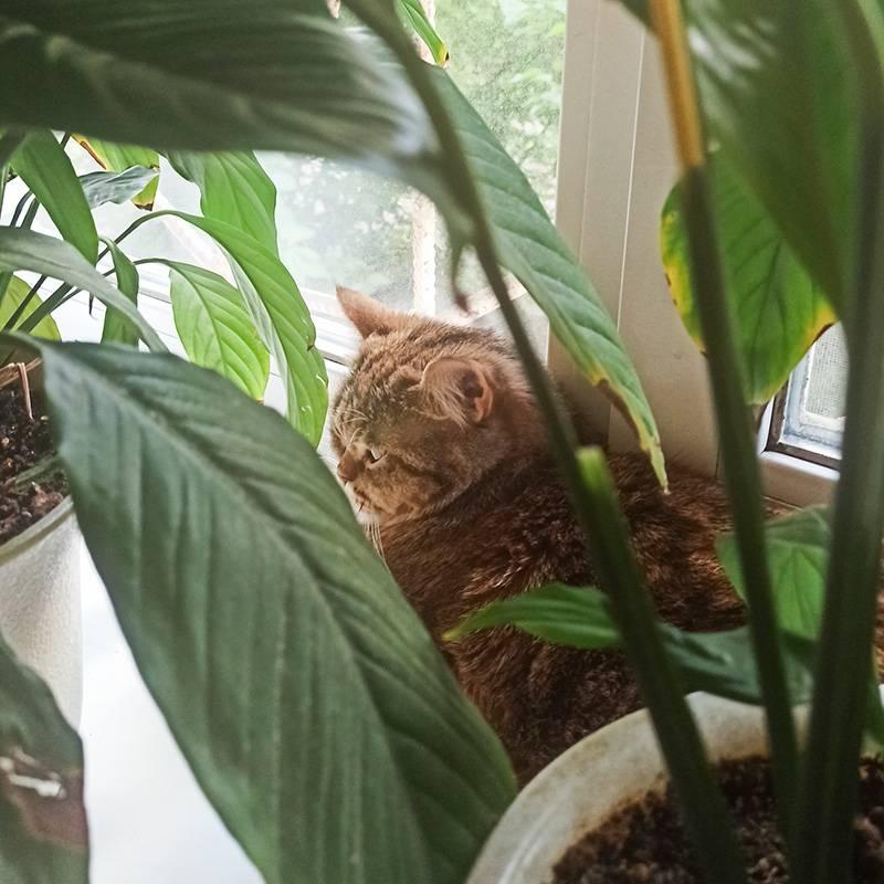 Пока я работаю, кошка расслабляется в джунглях