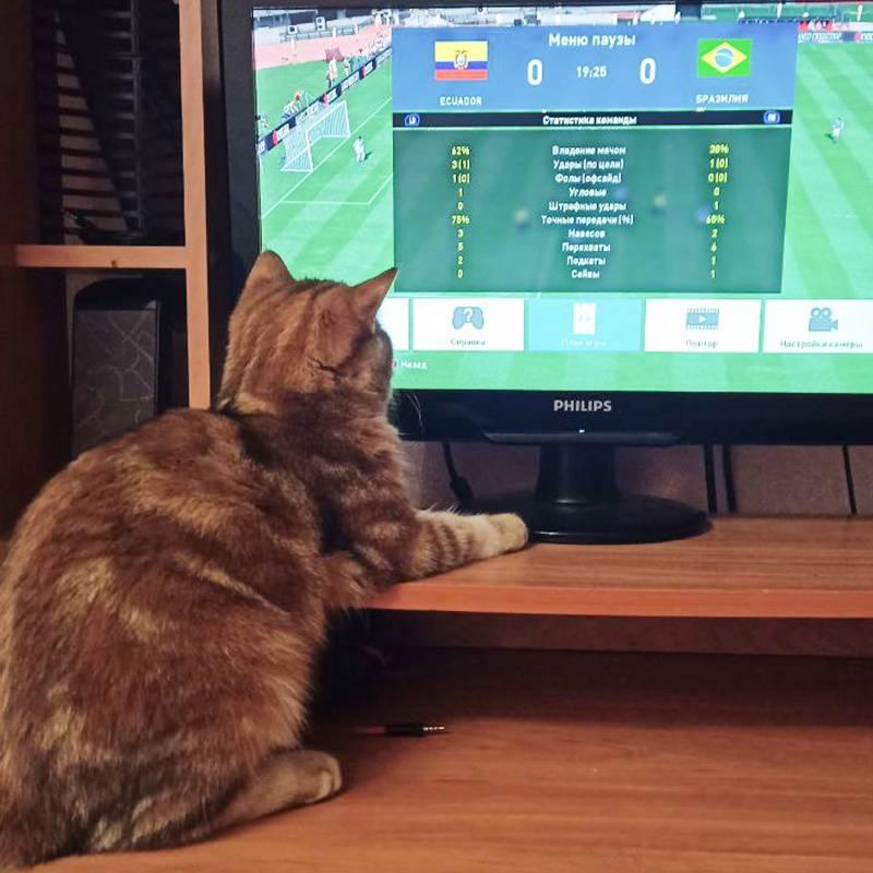 Ева интересуется футбольной статистикой