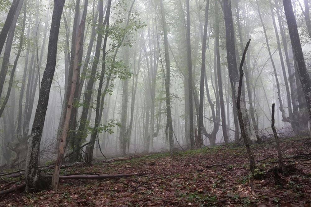 Буковый лес нагоре Бойко