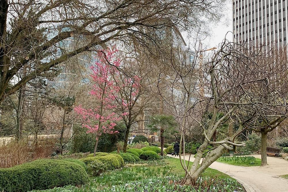Ботанический сад в феврале