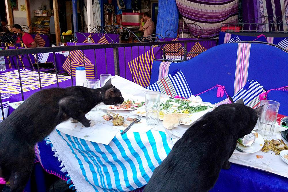 Местные коты доедают наш обед в уличном кафе на площади Шефшауэна