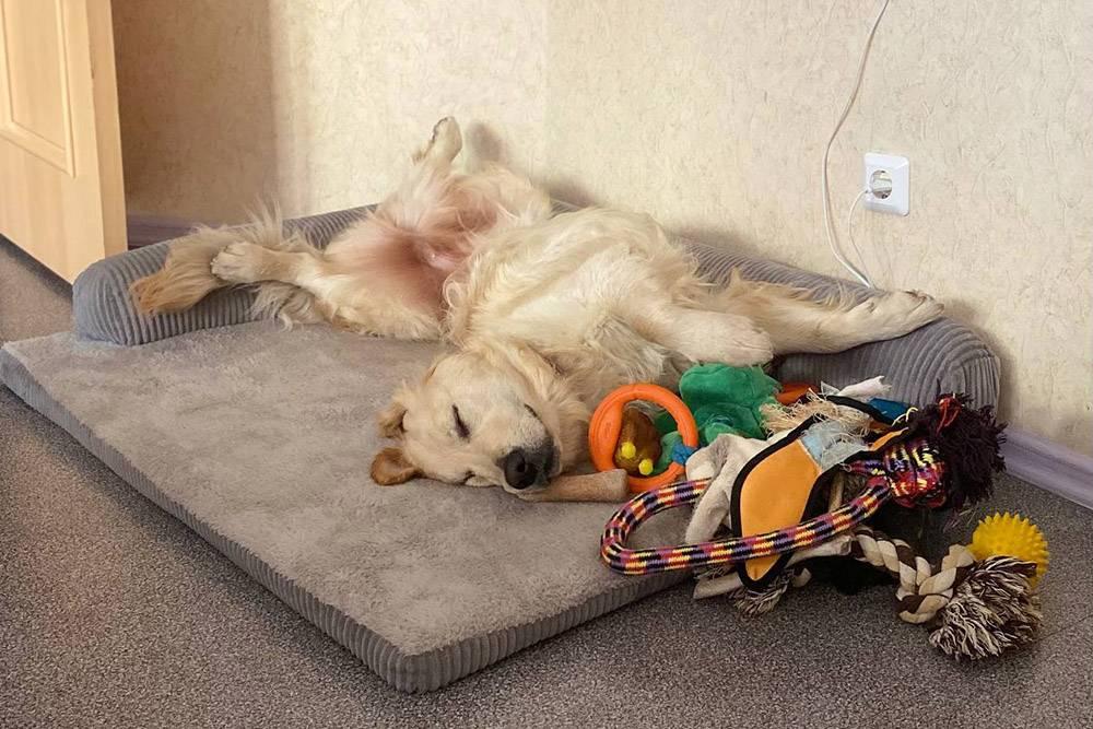 К. спит со своими игрушками