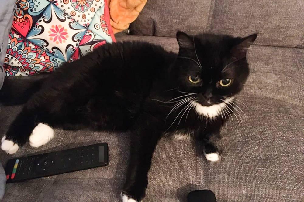Кошка проявляет к нам внимание, только когда хочет есть. В остальное время носится по квартире, валяется на диване или прячется, особенно когда кто-то приходит. Многие мои друзья никогда ее не видели, потомучто приних она постоянно уходит в подполье
