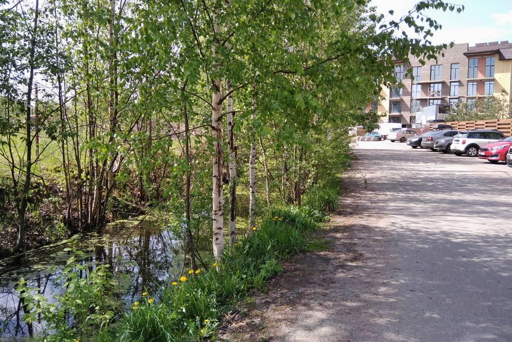Та самая небольшая речка, которую мы регулярно чистим