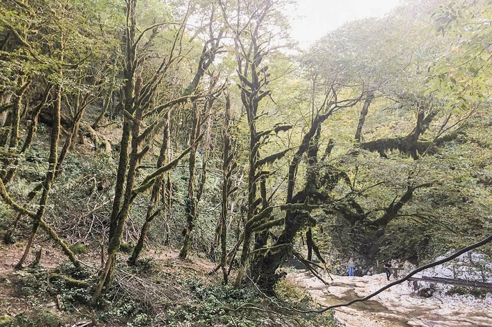 Лес в Черниговке покрыт мхом и выглядит таинственно и сказочно
