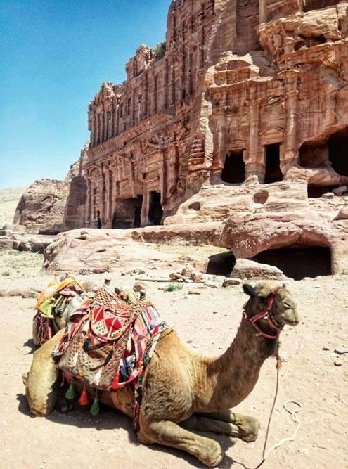 Единственный транспорт, который разрешен на территории Петры, — это верблюды, ослы, лошади