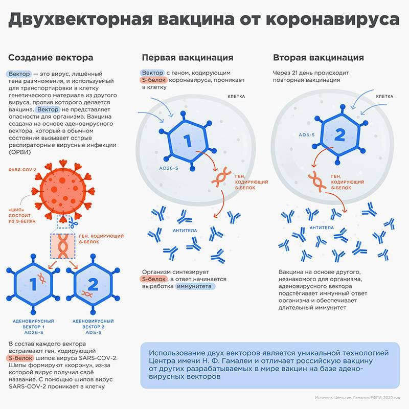 Как работает аденовирусная вакцина «СпутникV». Источник: sputnikvaccine.com