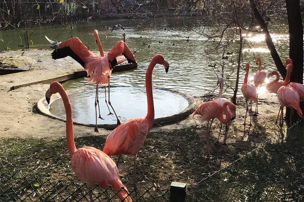 Провели субботу в Новосибирском зоопарке