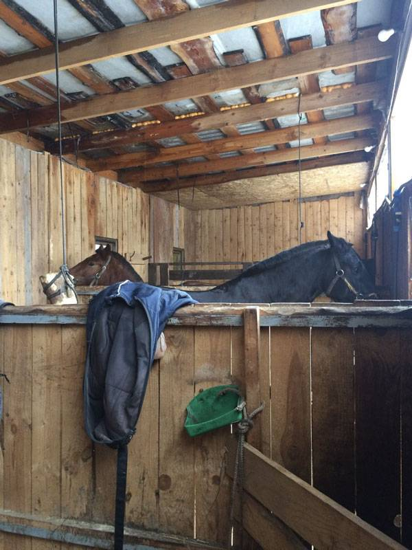Это денники в конюшне моего тренера. У нее три своих лошади и одна на постое. Она занимается с этой лошадью так же, как с другими: кормит, поит, лечит, выпускает гулять
