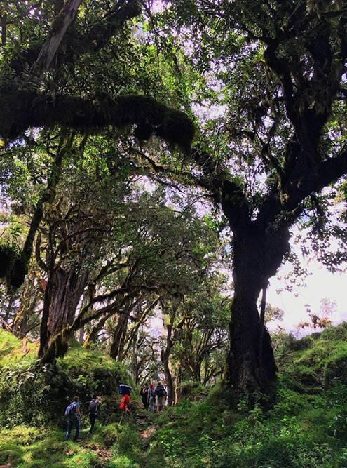 В парке Аруша больше всего поражает растительность: огромные деревья, всевозможные папоротники