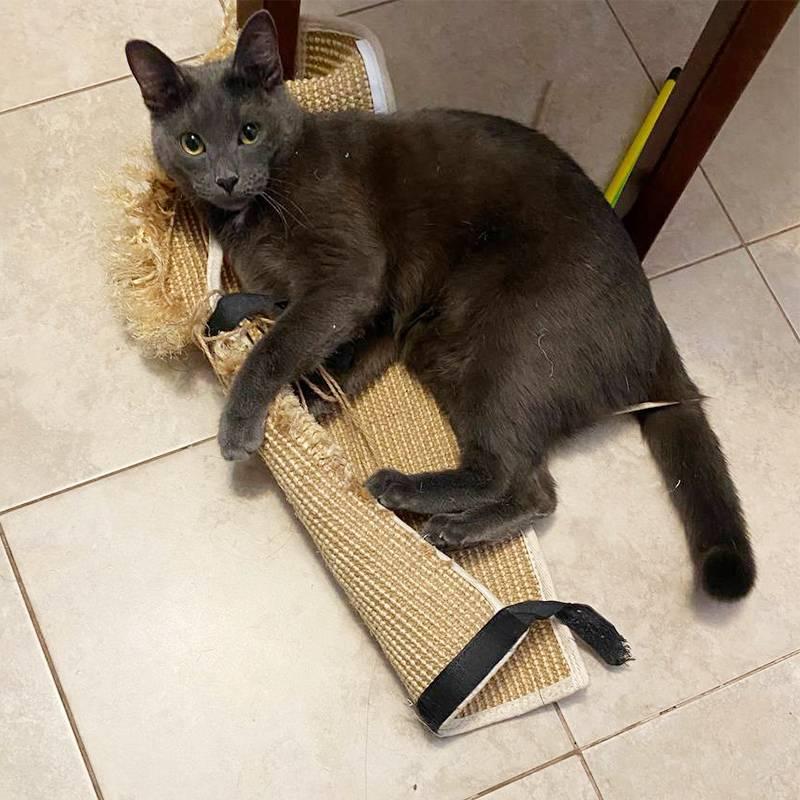Кот разрывает когтеточку