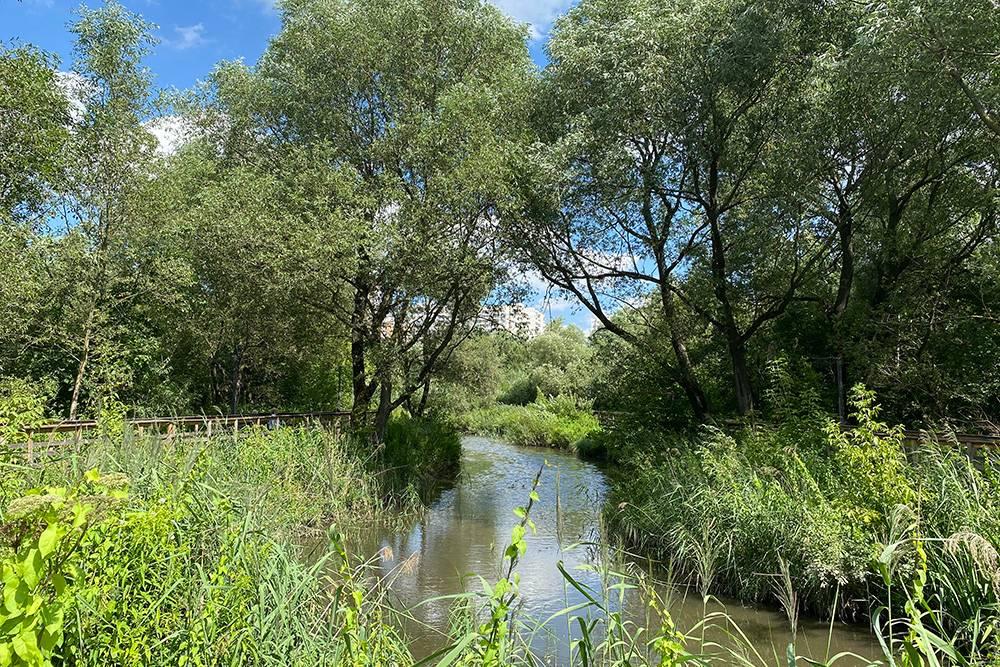 В парке хорошо: местами заросшая речка, деревянные дорожки и мостики