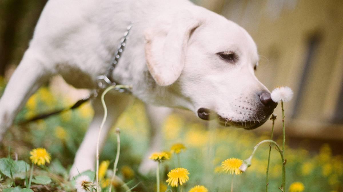 Как я 10 месяцев воспитывала собаку-поводыря