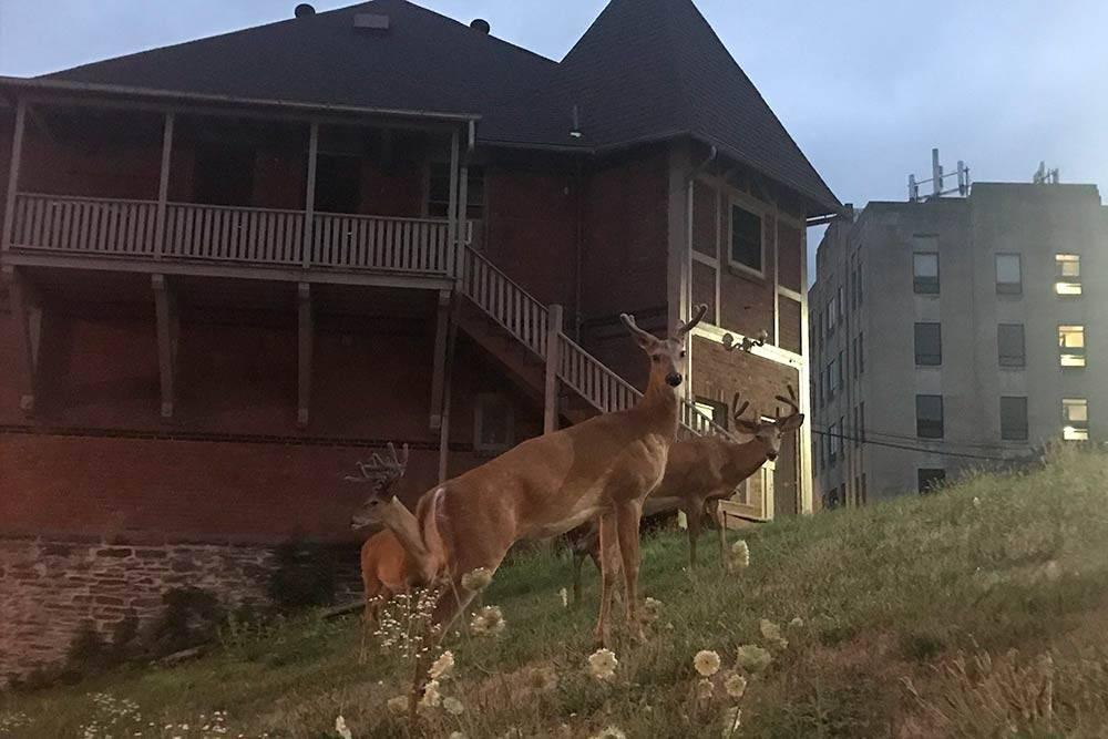 Итака — маленький город в удаленной части штата Нью-Йорк. По городу бегают олени, зайцы, белки, бурундуки, еноты и другая живность. Часто к моему окну приходит семья из трех оленей