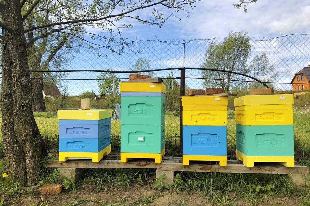 Это мои ульи из ППС — они легкие, удобные в работе, и пчелки в них зимуют отлично. На фото их четыре, но можно поставить ярусы один на другой, и у вас получится один большой вертикальный улей