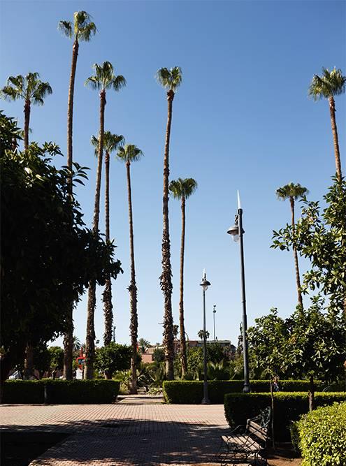 За мечетью есть сквер с пальмами