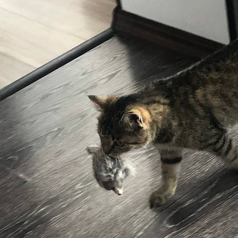 Мая и ее любимая игрушечная крыса. Она каждый раз ее дико «убивает», а потом берет в зубы и куда-нибудь прячет