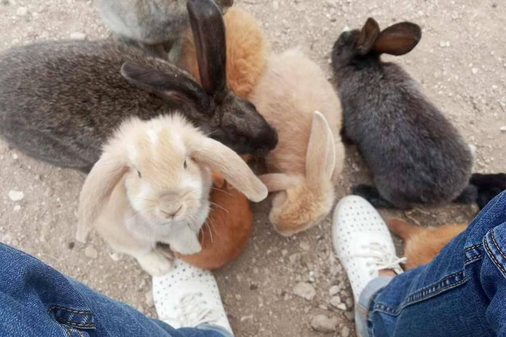 Кролики совсем не боятся людей