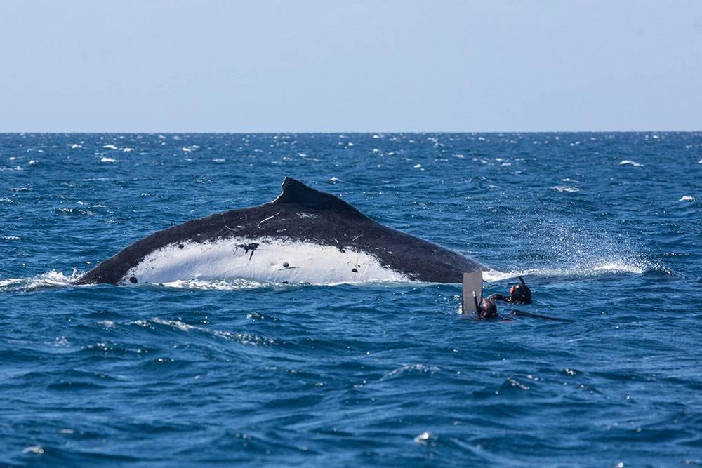 Плаваем с китом на Тонга. Сюда нас возят на яхте местные партнеры