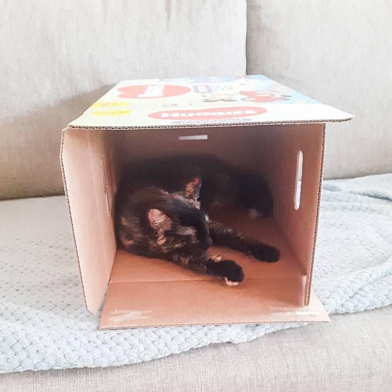 Кошка спит в коробке из-под подгузников