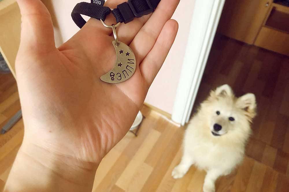 У нашей собаки есть клеймо на правом ухе, но мы все равно купили ей адресник. Все элементы на нем мастер чеканил вручную, а не лазером — такой оттиск долговечнее