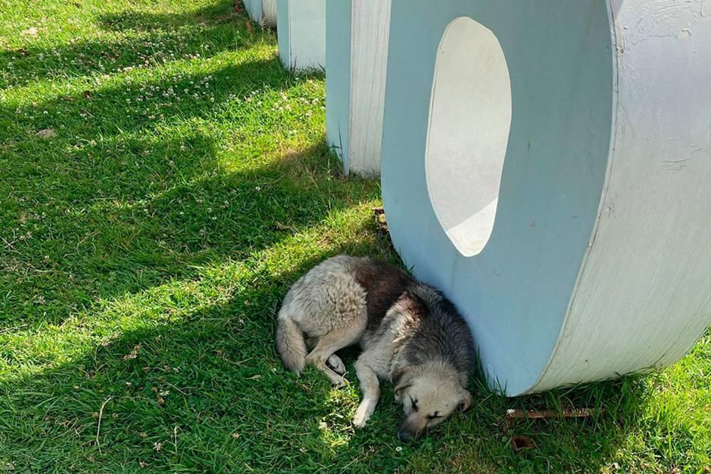 Бродячих собак в Батуми много, но они не агрессивные