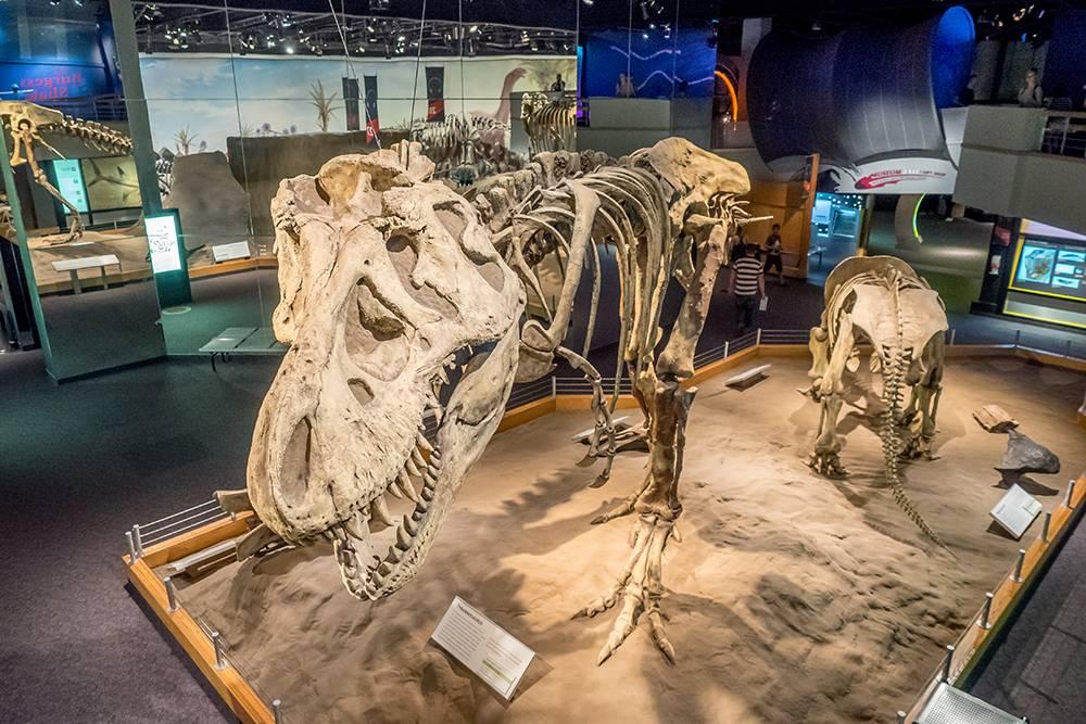 Мне показалось, что музей больше подходил длясемей с детьми, но мне тоже было интересно. Источник: Jeff Whyte / Shutterstock