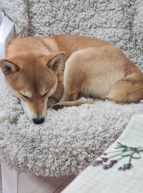 Собакен тем временем засыпает