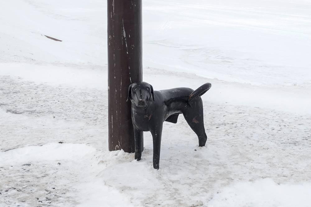 Собака у памятника первому электрическому фонарю прославилась больше, чем сам фонарь