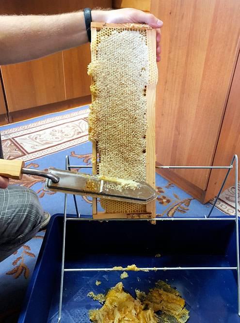 Вскрытие рамок перед откачкой меда. Удобнее всего это делать специальным ножом, который нагревается, как утюг. Внизу в лотке — забрус