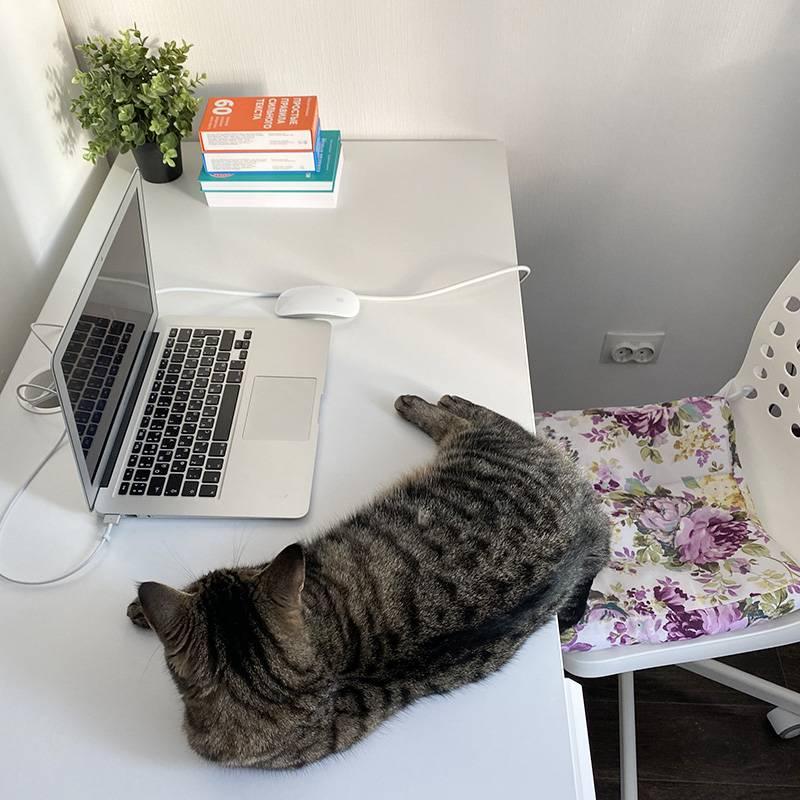 Кошка Матильда — важная часть рабочего процесса