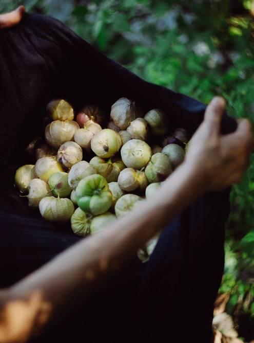 За 2020год на своем участке мы вырастили больше 2,5 тонны еды: несколько видов зелени и капусты, перец, помидоры, тыкву, арбузы и дыни, картофель. На фото — урожай физалиса