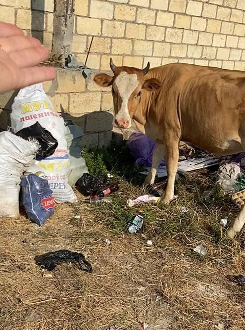 В Дагестане действительно очень много мусора