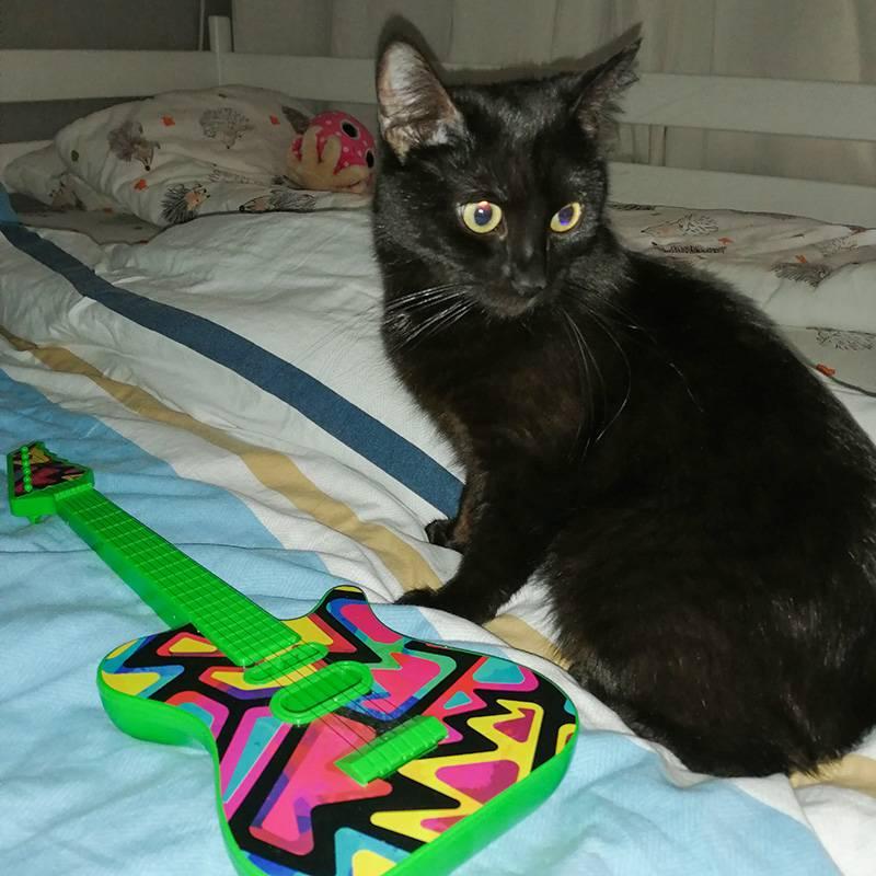 Кошка учится играть на гитаре
