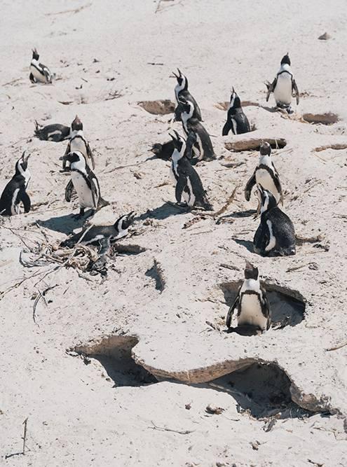 Птицы роют гнезда в песке