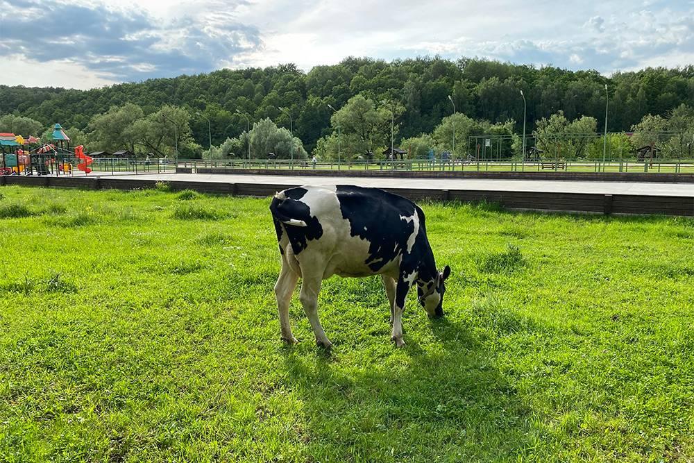На территории экоотеля паслись коровы. Здесь также есть конюшня и загоны с курами, индюшками, козами, овцами и очень довольно похрюкивающими свиньями. К реке Осетр ведет лестница, на ней — небольшой причал