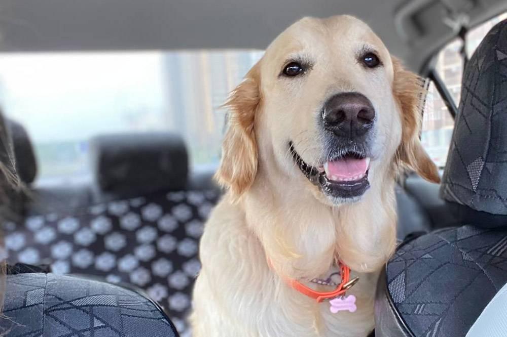 Собака с нами в машине