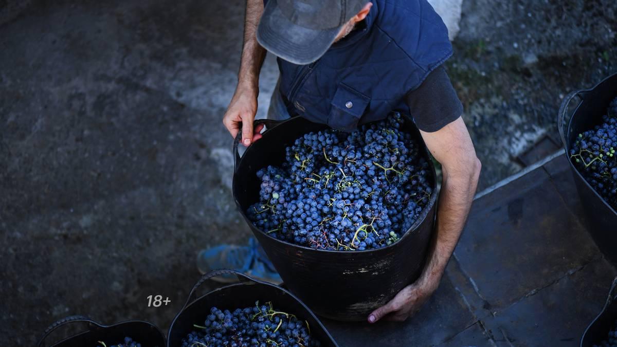 Как сделать домашнее вино из винограда